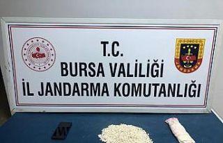 Bursa'da kırlentin içine gizlenmiş 1821 adet...