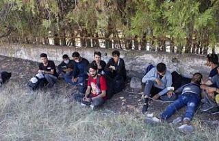 Edirne'de 7 sığınmacı yakalandı
