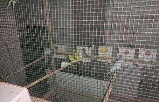 Apartmanda çıkan yangında 80 muhabbet kuşu kurtarıldı