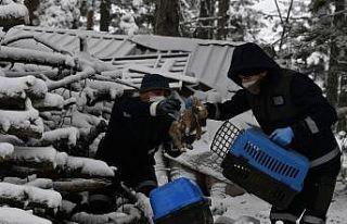 Uludağ'da donmak üzereyken bulunan köpek yavrularını...