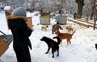 Yalova'da yabani hayvanlar için doğaya tonlarca...