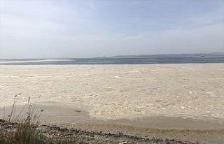 """Yalova Altınova sahilinde """"deniz salyası"""" nedeniyle..."""