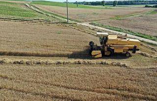 Buğday hasadına başlayan Edirneli çiftçinin yüzü,...