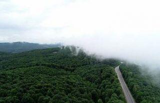 Istranca ormanlarını saran sisin büyüleyici güzelliği...