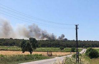 Bozcaada'da ormanlık alanda çıkan yangına...