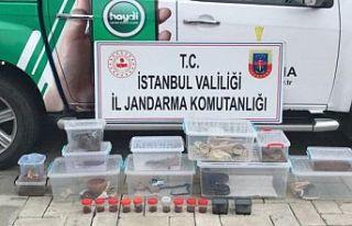 İstanbul'da ticareti yasak olan 21 hayvan ele...