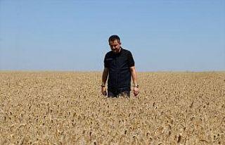 """Tarım ve Orman Bakanı Pakdemirli: """"Kanola tohumunun..."""
