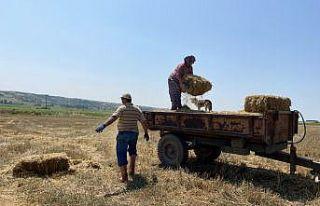 Trakya çiftçisi bayramda da üretime devam ediyor
