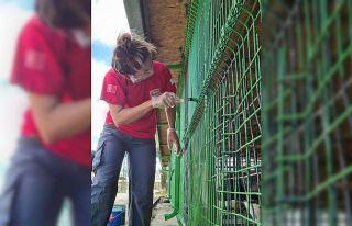 Bursa'da arama kurtarma ekibi ve hayvanseverler...