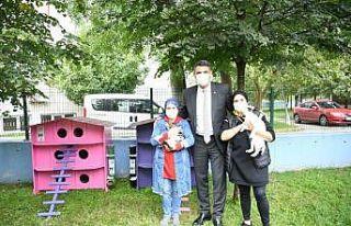 Kocaeli'de sokak kedileri rengarenk ahşap evlerle...