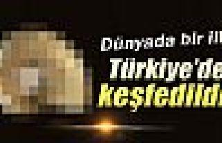 Bu canlı türü Türkiye'de tespit edildi!