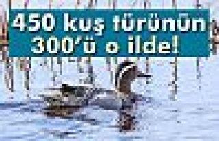 Erçek Gölü Havzası, Türkiye'deki 450 kuş türünün...
