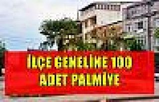 İLÇE GENELİNE 100 ADET PALMİYE