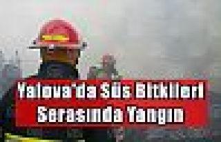 Yalova'da süs bitkileri serasında yangın