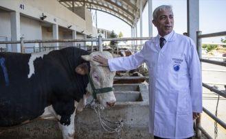 TBMM Tarım Orman ve Köyişleri Komisyonu Başkanı Kılıç: Kurbanlık hayvan ithal etmedik