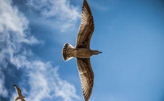 Dünyanın en büyük kuşu üç metrelik 'Vorombe titan'