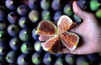 Singapurlu ve Malezyalılara siyah incir tanıtılacak