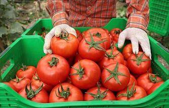 Yayla domatesine talep arttı