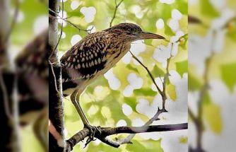 Yalova'daki Hersek Lagünü'nde kuş türü sayısı 230'a yükseldi