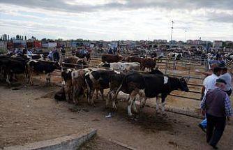 Trakya'nın en büyük hayvan pazarı cuma günleri kurulacak