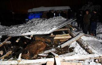Bursa'da kardan damları çöken iki ahırdaki 9 büyükbaş hayvan telef oldu