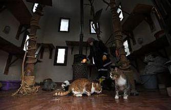 """Bursa'da sahipsiz kediler """"villa""""daki sobanın başında kışın tadını çıkarıyor"""