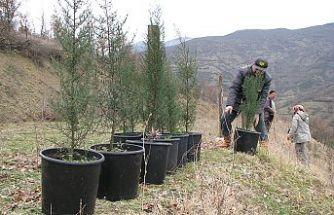 """Bekir Karacabey; """"50 yıl sonrası için ormanlarımızı bugün gençleştiriyoruz"""""""