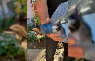 Kırklareli'nde başı pet şişeye sıkışan yavru kediyi itfaiye kurtardı