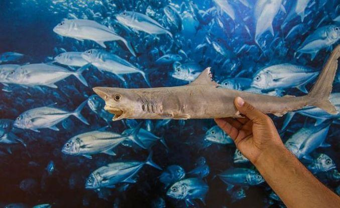 Üç kıtadan getirilen balıklarla müze oluşturuldu