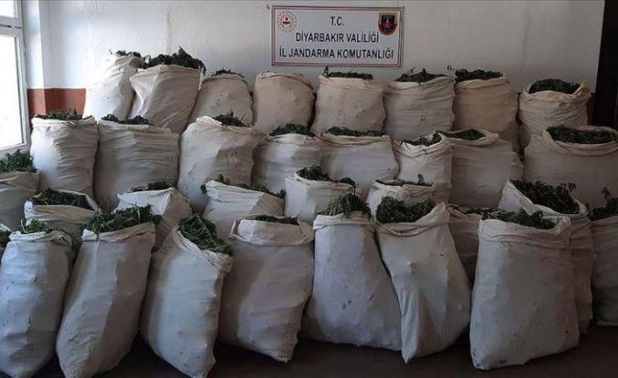 Dev uyuşturucu operasyonu: 1 milyon 119 bin kök kenevir ve 756 kilogram esrar ele geçirildi