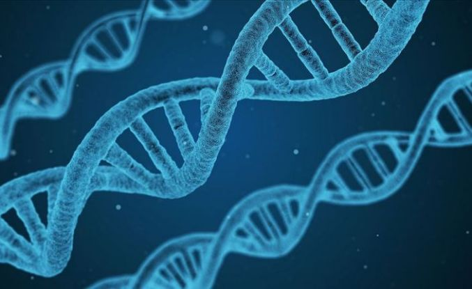 Uludağ Üniversitesi'nde erkek kısırlığıyla ilişkili yeni bir gen tanımlandı