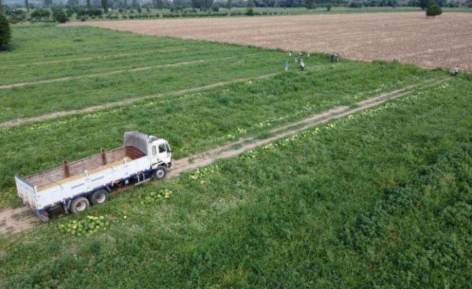Bilecik'te karpuz hasadına başlandı