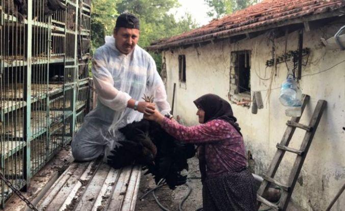"""Kocaeli'de yürütülen proje kapsamında üreticilere bu yıl 15 bin """"atak-s yarka tavuk"""" dağıtılacak"""