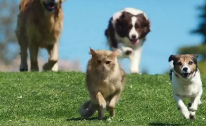 Köpeğinden kaçan kedinin ölümüne yol açan kişiye para cezası verildi
