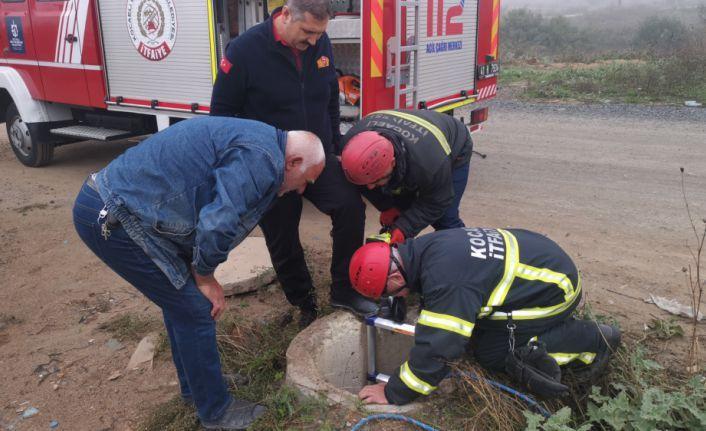 Kocaeli'de kuyuya düşen köpeği itfaiye ekipleri kurtardı